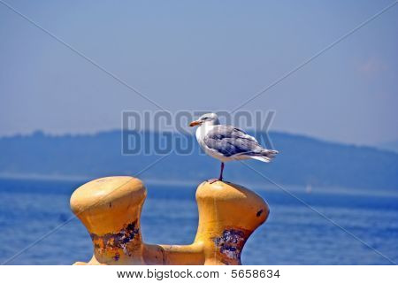 Seagull On The Dockside