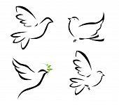 Vector illustration of flying dove on white poster