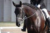 Beautiful sport horse portrait during dressage test in summer poster
