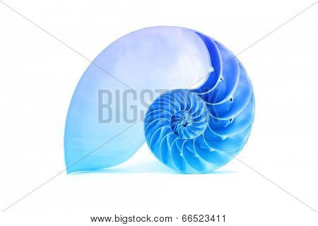 A perfect and amazing fibonacci pattern in a nautilus shell isolated on a white abckground with blue overlay affect