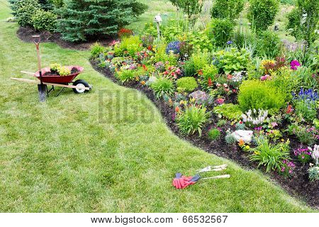 Planting A Beautfiul Colorful Celosia Flowerbed