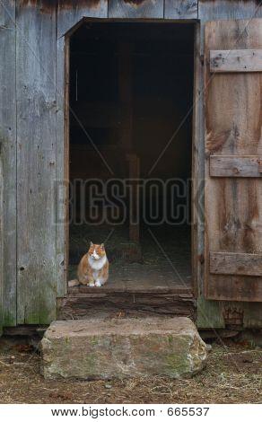 poster of Farm Cat