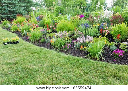 Lush Flowerbed With Colorful Flowering Celosia