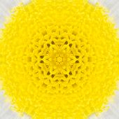 Concentric Flower Kaleidoscope with Yellow Center. Kaleidoscopic Design Pattern poster