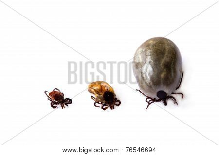 Different Ticks