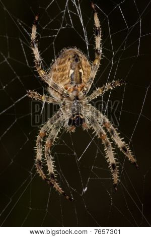Macro view of a spider waiting on it's web for a perfect attack. poster