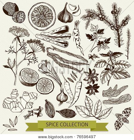 spices and herb illustration