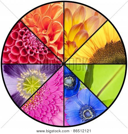 Rainbow Collage Of Flowers In Circular Frame