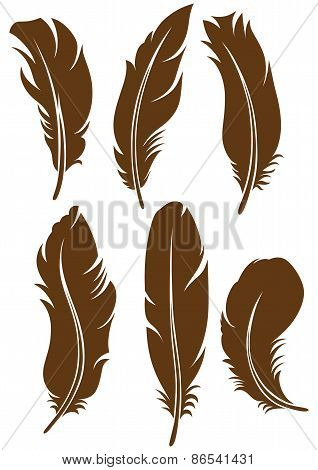 Symbol feathers