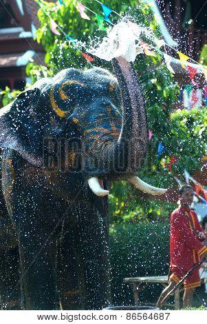 Young Elephant Splashing Water.