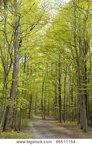 Hiking trail in a forest, taken at Dundas conservation area, Ontario, Canada.