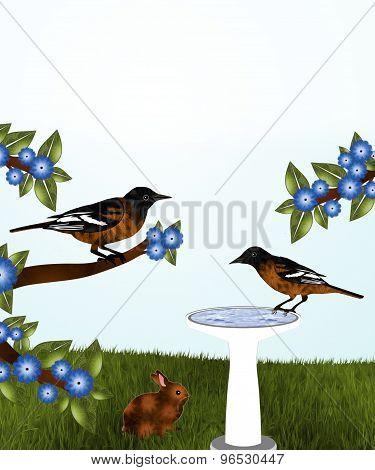 Orioles and Birdbath