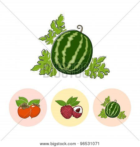 Fruit Icons, Watermelon, Lichee , Persimmon