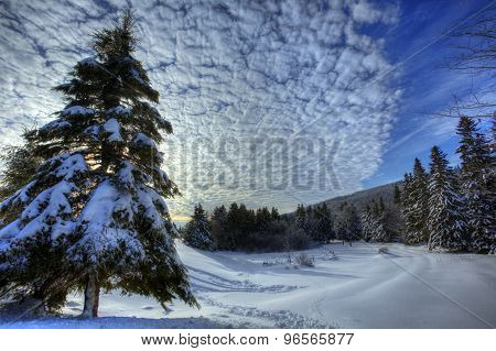 Hdr Snow Trees Winter Canada
