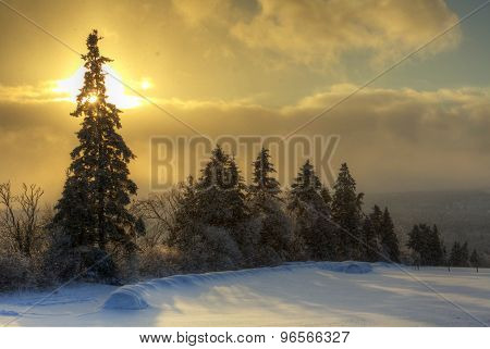Hdr Tree Lined Field Sun Snow Canada