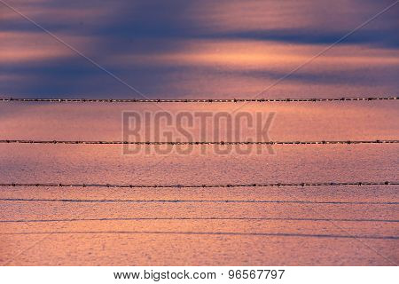 Pink Blue Snow Fence Wire