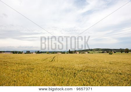 Agriculture Landscape In French Bourgogne