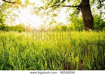 Summer Sunny Forest Trees