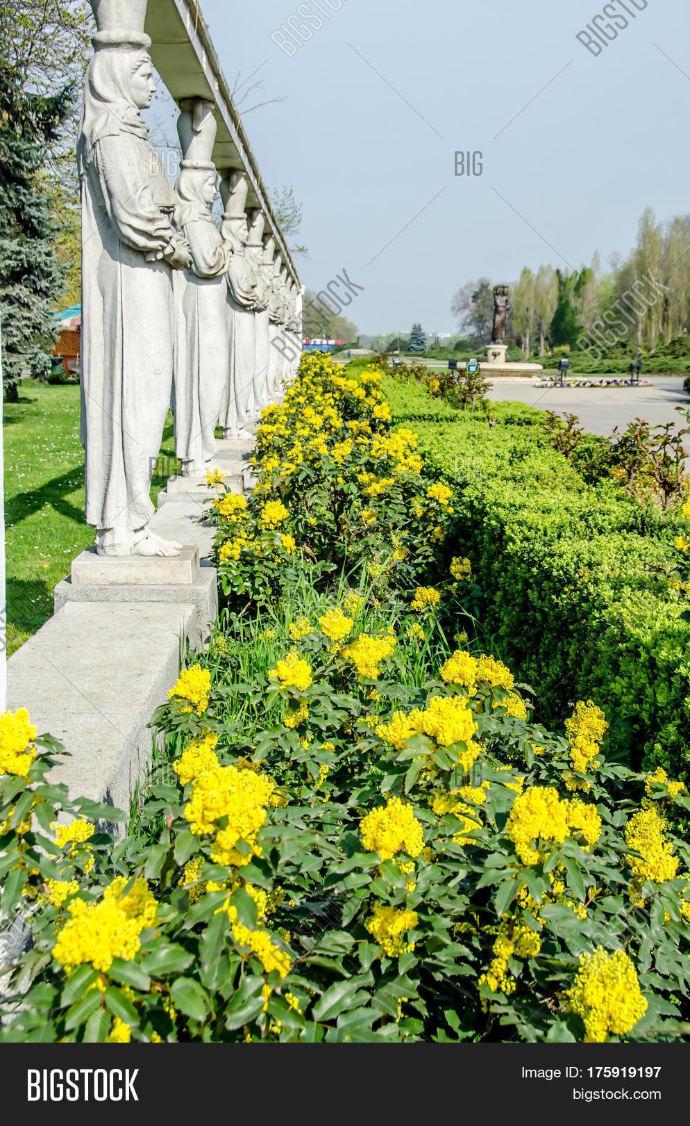 Yellow flowers called image photo free trial bigstock yellow flowers called saint joan flower galium verum mightylinksfo