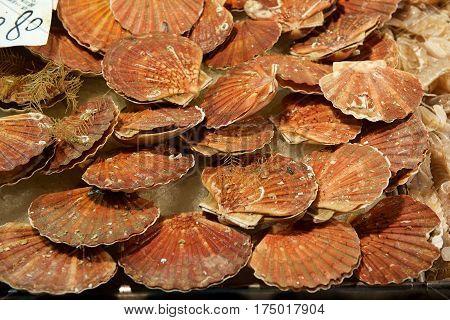 scallop shell background in street market, Venice, Italy. Fresh shell, marine life