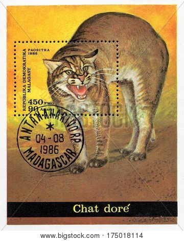 UKRAINE - CIRCA 2017: A stamp printed in Malagasy Madagascar shows Chaus panther circa 1986