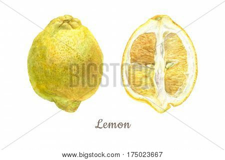 Botanical watercolor illustration of yellow lemon whole and cut isolated on white background. Could be used as decoration for web design polygraphy or textile