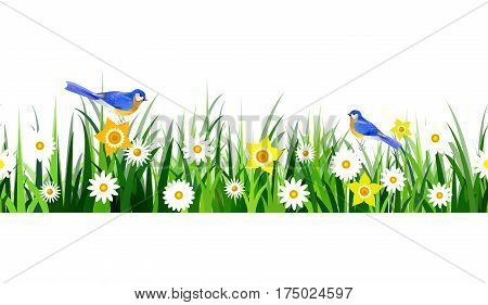 Green Grass seamless isolated clip art vector on white with bluebirds and yellow daffodils