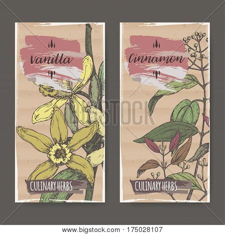 Set of two labels with Vanilla planifolia aka Vanilla and Cinnamomum verum aka cinnamon color sketch. Culinary herbs collection. Great for cooking, medical, gardening design.