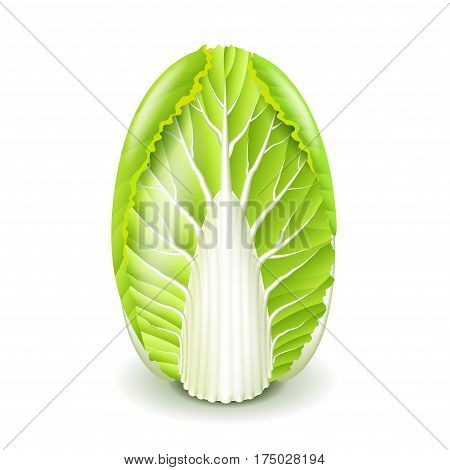 Fresh chinese cabbage isolated on white photo-realistic vector illustration