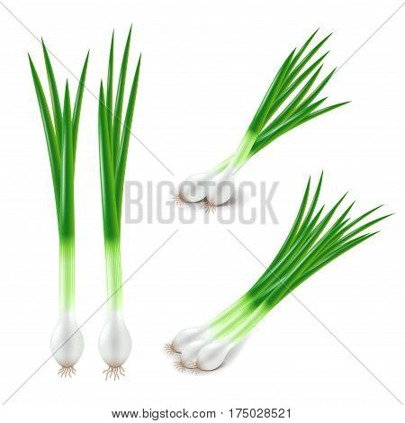Green onions set isolated on white photo-realistic vector illustration