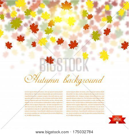 Autumn background with colored maple leaves. changing seasons illustration. Banner card poster. Stock vector illustration