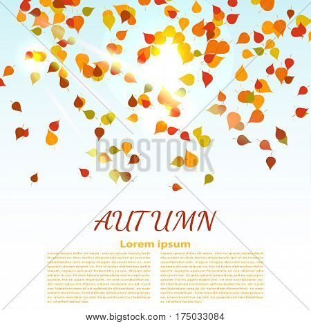 Autumn background with colored maple leaves. changing seasons illustration. Banner card poster advertising. A natural phenomenon. Stock vector illustration