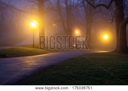 foggy evening in the park