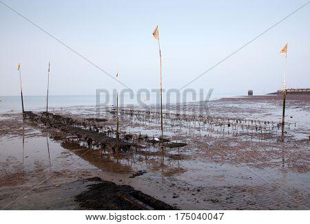 groynes on the shingle beach at whitstable kent