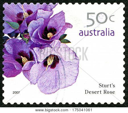 AUSTRALIA - CIRCA 2005: A used postage stamp from Australia depicting an image of a Sturts Deset Rose flower circa 2005.