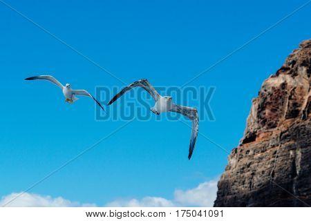 Flying Seagulls On The Blue Sky Near Rocky Cliffs