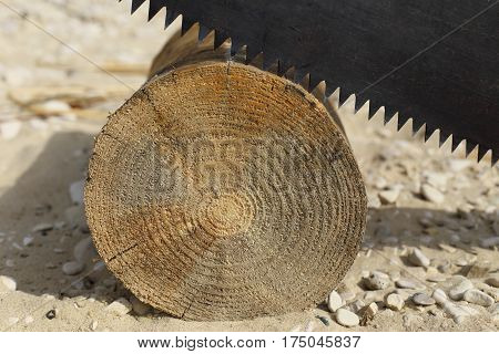 tree trunk lying on the sand. top sticks two-man saw.