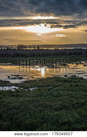 A Puget Sound sunset in reflected on a small pond.