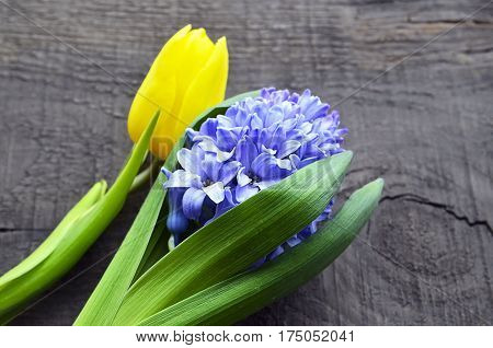 Blue hyacinth and yellow tulip on old wooden background with copy space.Hyacinth and tulip spring flowers.Springtime background.Selective focus.