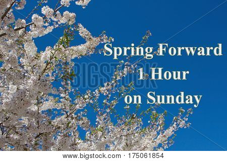 Spring Forward message A tree in full spring blossom with sky background with text Spring Forward 1 hour on Sunday