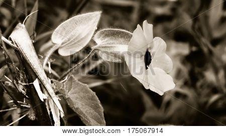 flor, planta, paisaje, naturaleza, blanco, negro, hojas