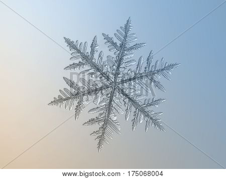 Macro photo of real snowflake: large snow crystal of fernlike dendrite type with complex structure, small center and six long arms with lots of side branches and icy
