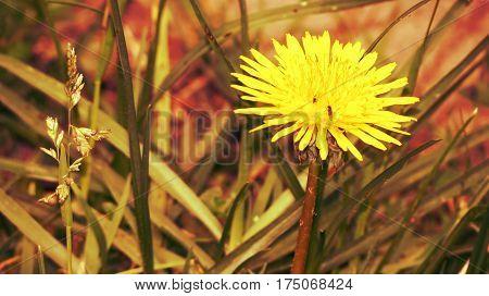 flor, naturaleza, amarillo, hojas, verde, pasto, planta poster
