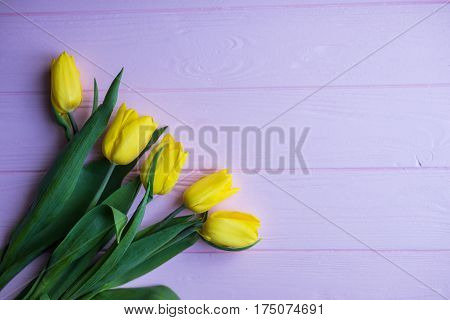 Background with yellow tulips on lila painted wooden planks. Place for text.
