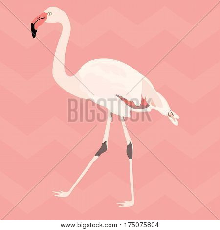 Hand drawn pink flamingo sketch style. Exotic bird with chevron background. Vector illustration.