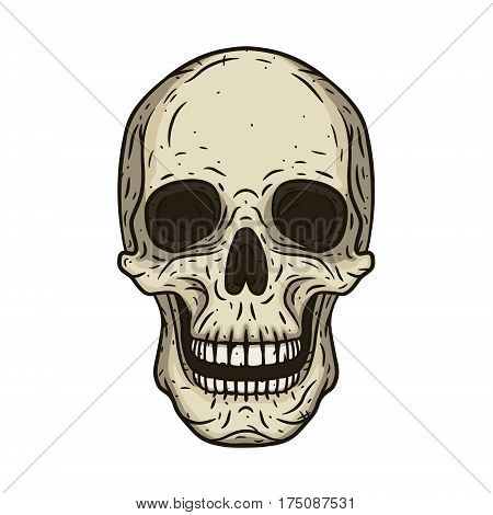 Vector illustration of human skull in hand drawn style