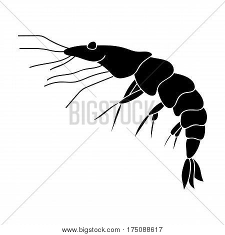 Shrimp icon in black design isolated on white background. Sea animals symbol stock vector illustration.