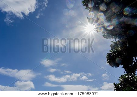 Lens flare through tree silhouette against blue sky