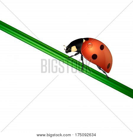 Vector background with realistic ladybug insect on white. EPS10 illustration.