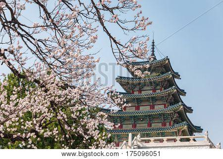Spring Cherry blossom or sakura in Seoul, South Korea